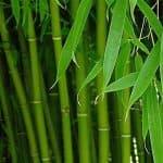 Бамбуковое волокно – универсальный материал с уникальными свойствами