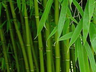 свойства бамбукового волокна